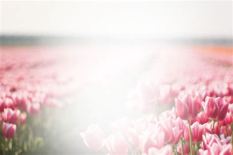 funeral background funeral background pictures wallpapersafari