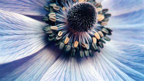 desktop wallpaper laptop mac macbook air ni flower purple zoom focus nature blue wallpaper