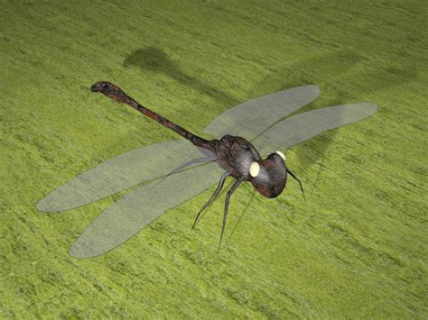 dragonfly project jun aguelo 3d artist project dragonfly