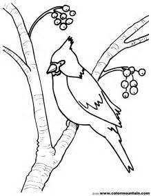 cardinal coloring page cardinal coloring sheet create a printout or activity