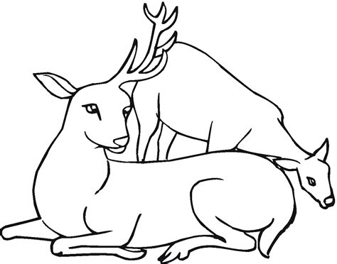 deer family coloring page free deer coloring pages