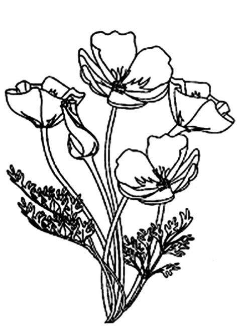 California Poppy Coloring Page picture of blooming california poppy coloring page artsy