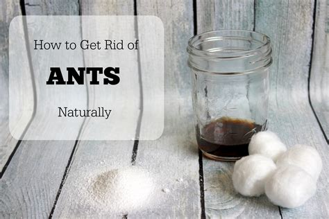 get rid of ants naturally