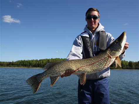 boat tour edmonton reel angling adventures alberta guided fishing tours