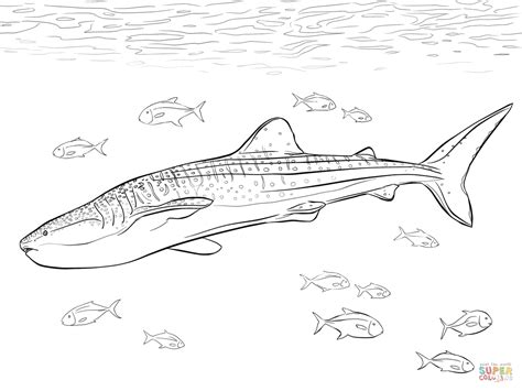 Whale Shark Coloring Pages Realistic Whale Shark Coloring Page Free Printable