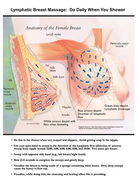 self breast diagram pin lymphatic drainage on