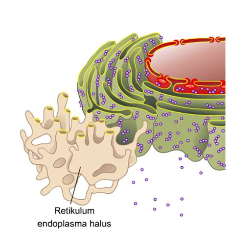 Fungsi Dan Bio wahim boys bio plus struktur dan fungsi sel