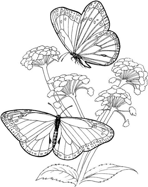 butterflies coloring book for adults books free coloring pages of butterfly