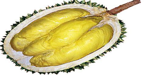Bibit Durian Petruk Jepara gambar durian petruk khas jepara mulai langka muria news