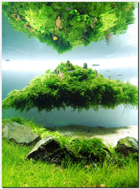 aquascape   month august    nature