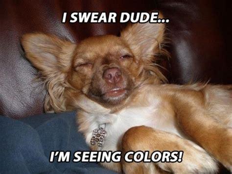 Stoned Dog Meme - stoner dogs meme 10 dog meme funny dog memes dog memes stoner pets pinterest