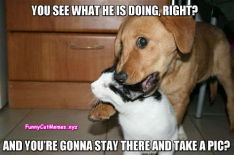 Funny Cat And Dog Memes - ace of spades hq