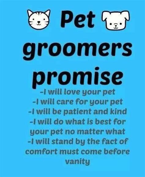 grooming ky 25 b 228 sta pet grooming id 233 erna p 229 husdjurssk 246 tsel tips husdjursv 229 rd