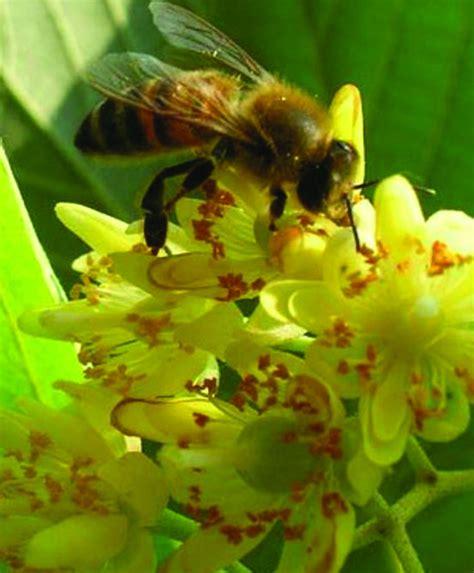 giardini in fiore giardini in fiore e lotta alla zanzare comune di correggio