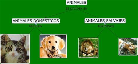 imagenes de animales salvajes y domesticos animales domesticos y salvajes cmap