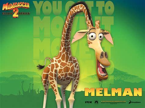 imagenes de jirafas de madagascar melman de madagascar imagui