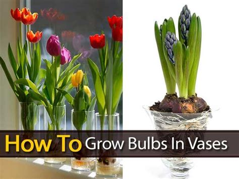 How To Take Care Of Flowers In Vase by Growing Your Other Favorite Bulbs In Vases To Produce