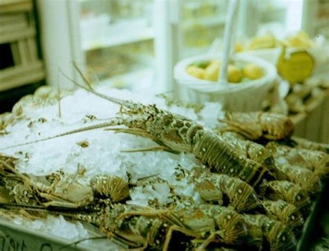 key largo fisheries backyard yum fresh lobster picture of key largo fisheries