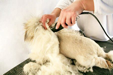 8 Tips On Grooming Your Cat by Cat Grooming And Hairstyles Pets Wiki We