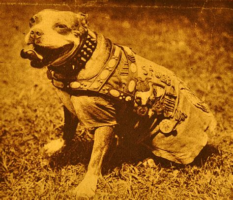 Sgt Stubby Medals A S Nature Stubbydog