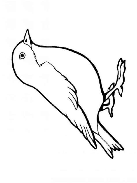 coloring page of house sparrow sparrow coloring page coloring home