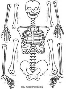 25 best ideas about human skeleton for kids on pinterest