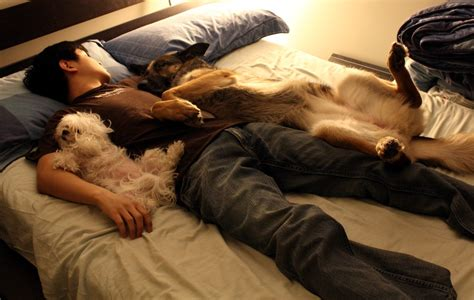 my ate me out in my sleep how my dogs sleep when my boyfriend is here aww