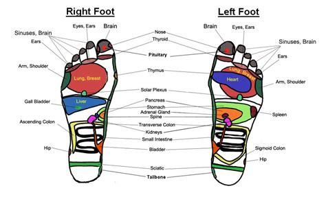 reflexology diagram of foot services ta envy ta