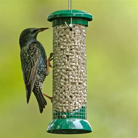 know about helpful bird feeding tips