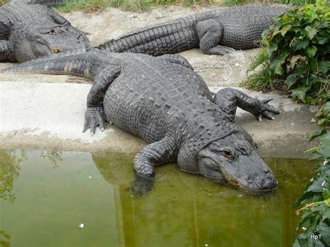 zoologischer garten berlin krokodile galerie erste tier fotos eu
