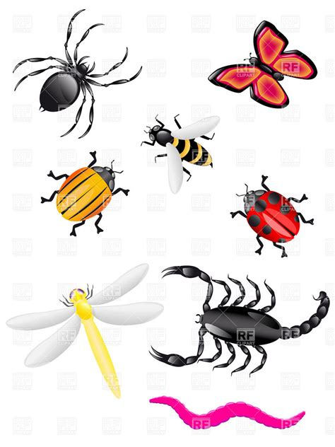 insectanatomy free insect animal pictures gallery clip art images of bugs in plants clipart clipart suggest
