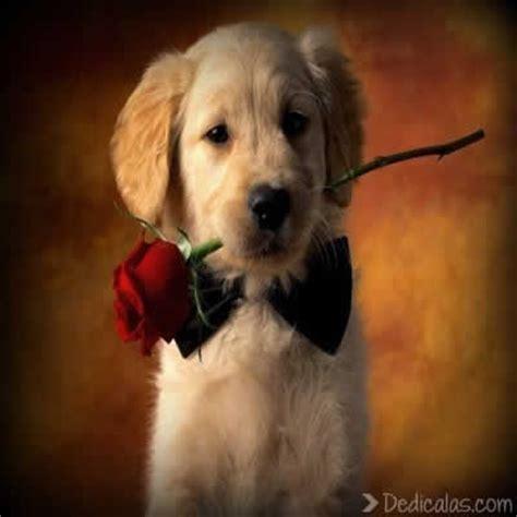 imagenes bonitas de animales imagenes tiernas y bonitas animales enamorados imagenes