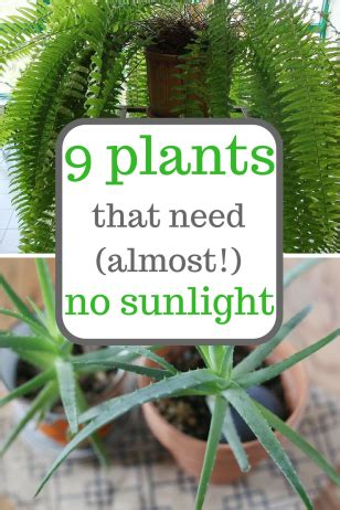 plants that need no sunlight 9 plants that need almost no sunlight sunlight