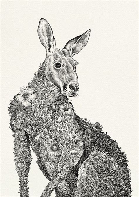 kangaroo original marini ferlazzo for wildlife