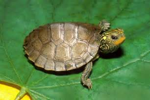 map turtle 2048 turtle