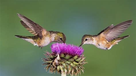 hummingbirds plus feeding news study group more