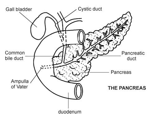 pancreatitis diagram pancreas diagram patient