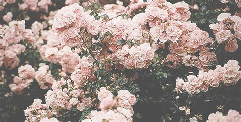imagenes tumblr flores capas de flores tumblr