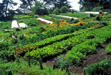Landscape Supply Ukiah Localorg Permaculture A Healthy Sustainable Alternative