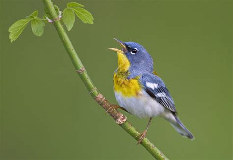 celebrate international migratory bird day this weekend at
