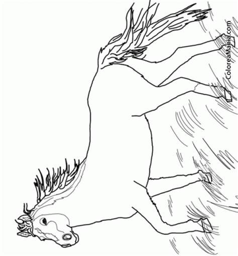 imagenes animales salvajes para dibujar colorear caballo mustang salvaje animales domsticos