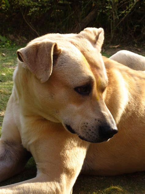 uri in dogs onigiri arancini those who follow their stomachs never regret it