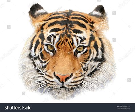 tiger colors tiger draw paint color stock illustration