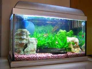 bahan untuk membuat filter aquarium cara membuat filter aquarium sendiri arafuru
