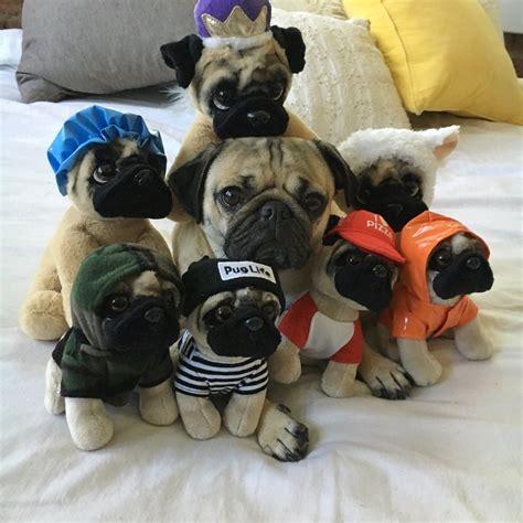 doug pug store doug the pug on quot now u can cuddle with ur own doug the pug every doug s