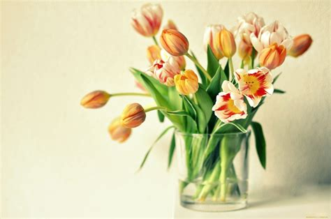 Tulips Vase by Tulips Vase Wallpapers Hd Desktop Imagebank Biz