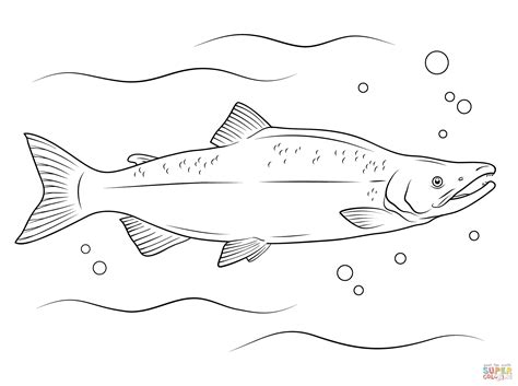 Salmon Fish Coloring Pages | pacific salmon coloring pages download and print for free