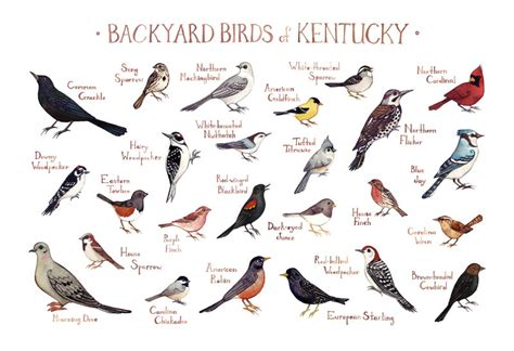 common backyard birds of kentucky palgiiwal