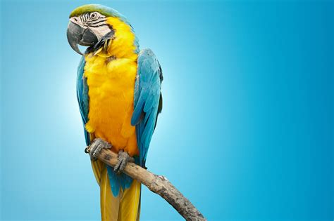 Home Decor Magazine Online talkative parrot at heart of philly divorce settlement