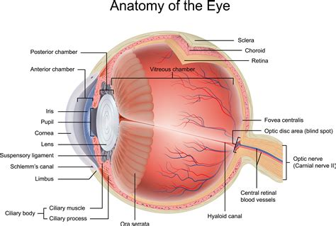 a diagram of a eye diagram of the eye diagram site